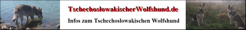 Tschechoslowakischer Wolfshund Infos